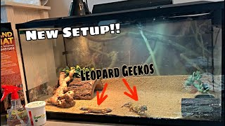 My Leapord Geckos NEW TANK SETUP!! (INSANE)