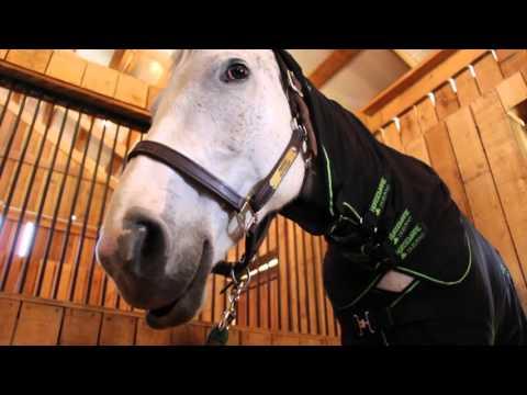Horseware Ireland Sportz-Vibe Massage Therapy Blanket | FarmVet