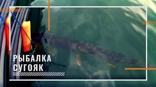 Рыбалка на озере хохловатое челябинская область