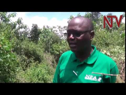 NFA starts campaign to restore mabira forest