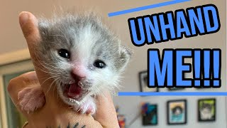 Tiny Meowing Kitten is NOT READY to Grow Up!