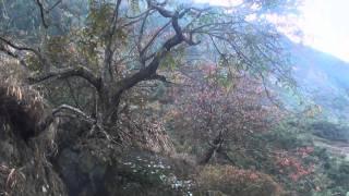 preview picture of video 'Trekking around Manaslu Nepal part 2.wmv'