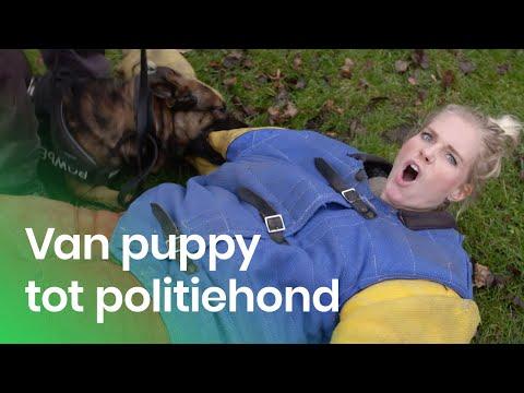 De training van een politiehond | Het Klokhuis