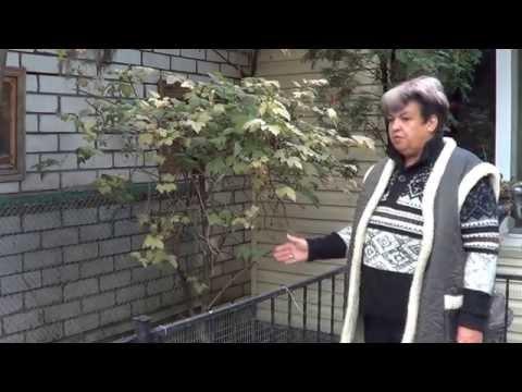 Садоводство. Калина. ПРАВИЛА УХОДА ЗА КАЛИНОЙ . Топ-20 самых лучших кустарников для сада