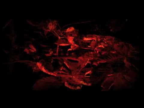 Reactive Black - Doom