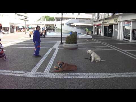 Il resta di un cucciolo di 5 mesi di Golden Retriver, di nome Marvin, al centro commerciale.