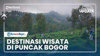 TRAVEL UPDATE: Berkunjung ke Kebun Teh Gunung Mas di Kawasan Puncak Bogor