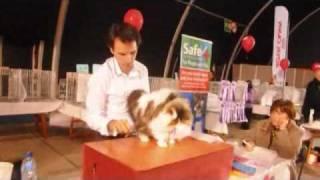 Malta Cat club 4th International Cat SHow at MFCC.wmv
