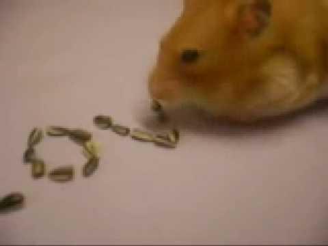 好神奇的小老鼠~會拼我愛你呃~