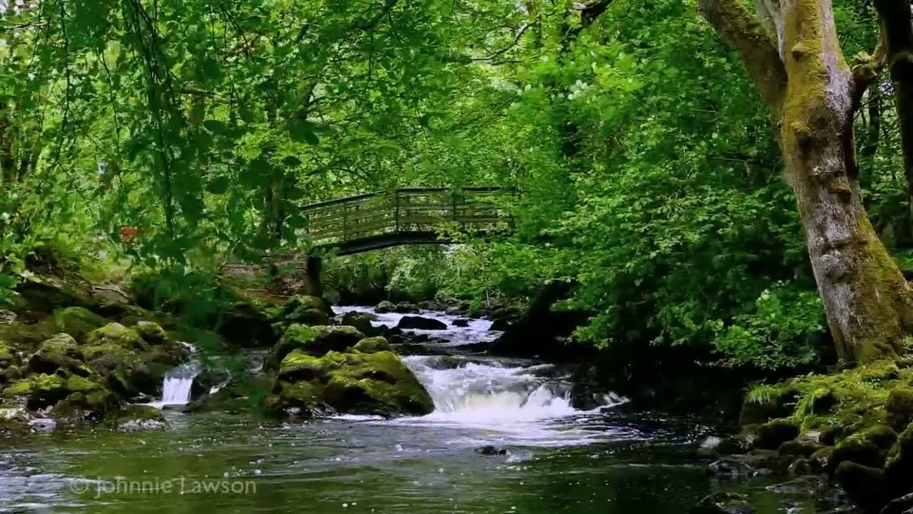 Free Download Nature Sounds Meditation