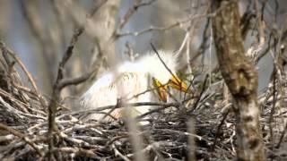 Birding And Birdwatching In Southwest Louisiana