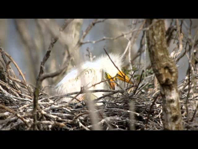 Birding and Bird Watching in Southwest Louisiana