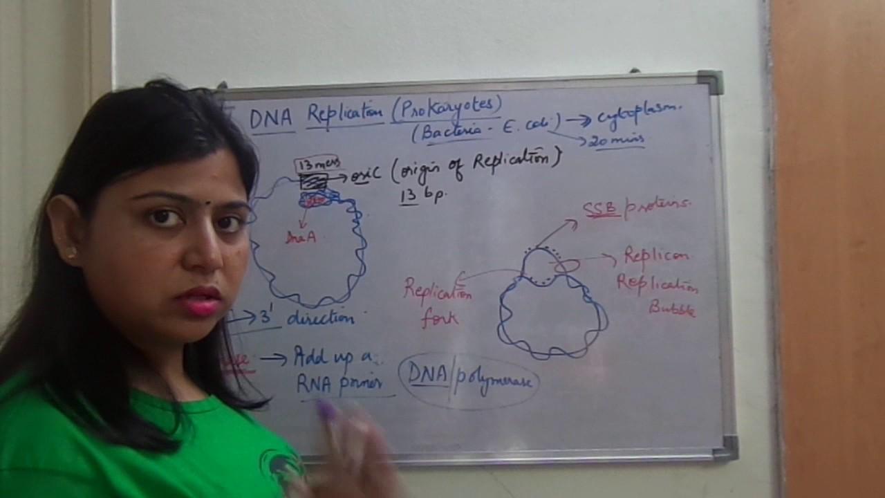 Dna Replication In Prokaryotes