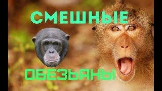 Смешные обезьяны.Приколы про обезьян.