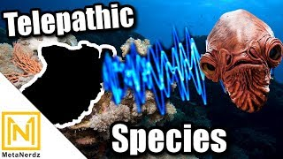 The STRANGEST Species Under the Sea - Knowledge Bank Species - Star Wars Aliens & Races Explained