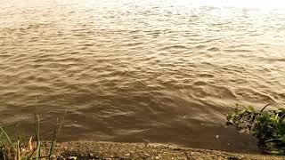 preview picture of video '#চলনবিল এর পানির প্রাকৃতিক সৌন্দর্য'