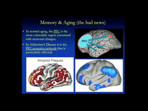 Human Memory, Aging and the Brain or Where Did I Put Those Keys?