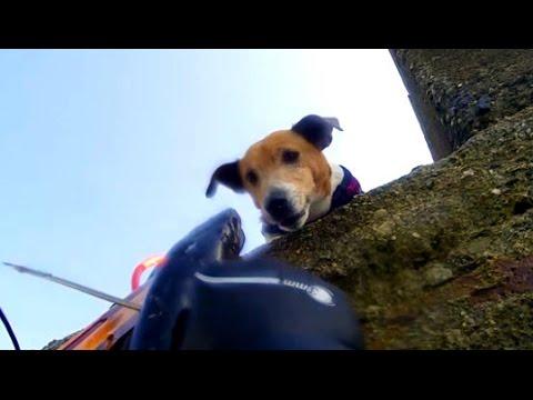 Pesca video di primavera del 2015