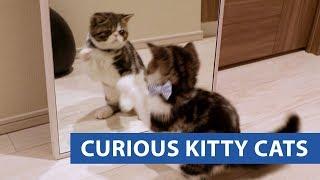 animale pisici curioase