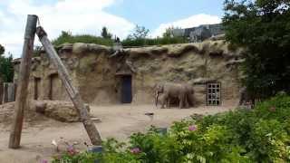preview picture of video 'Tiergarten Heidelberg'