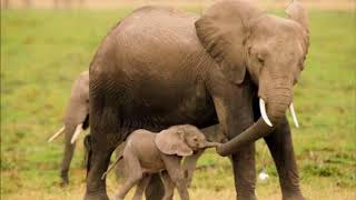 Elefante Con Le Ghette Free Video Search Site Findclip