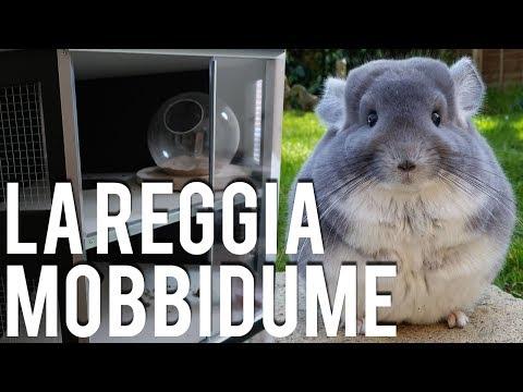 La Reggia del Mobbidume! - Cincillà Vlog