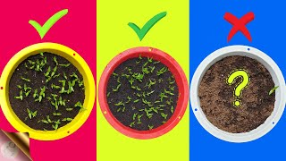 7 FATAL MISTAKES: Why Seeds Not Germinating or Sprouting?