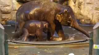 БАННЫЙ ДЕНЬ В СЛОНОВНИКЕ   (Московский Зоопарк)