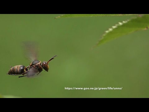 庭の虫の飛翔