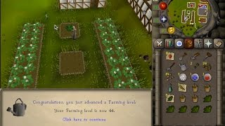How to get started Farming Guide OSRS/2007! Plus is it worth doing farm runs?