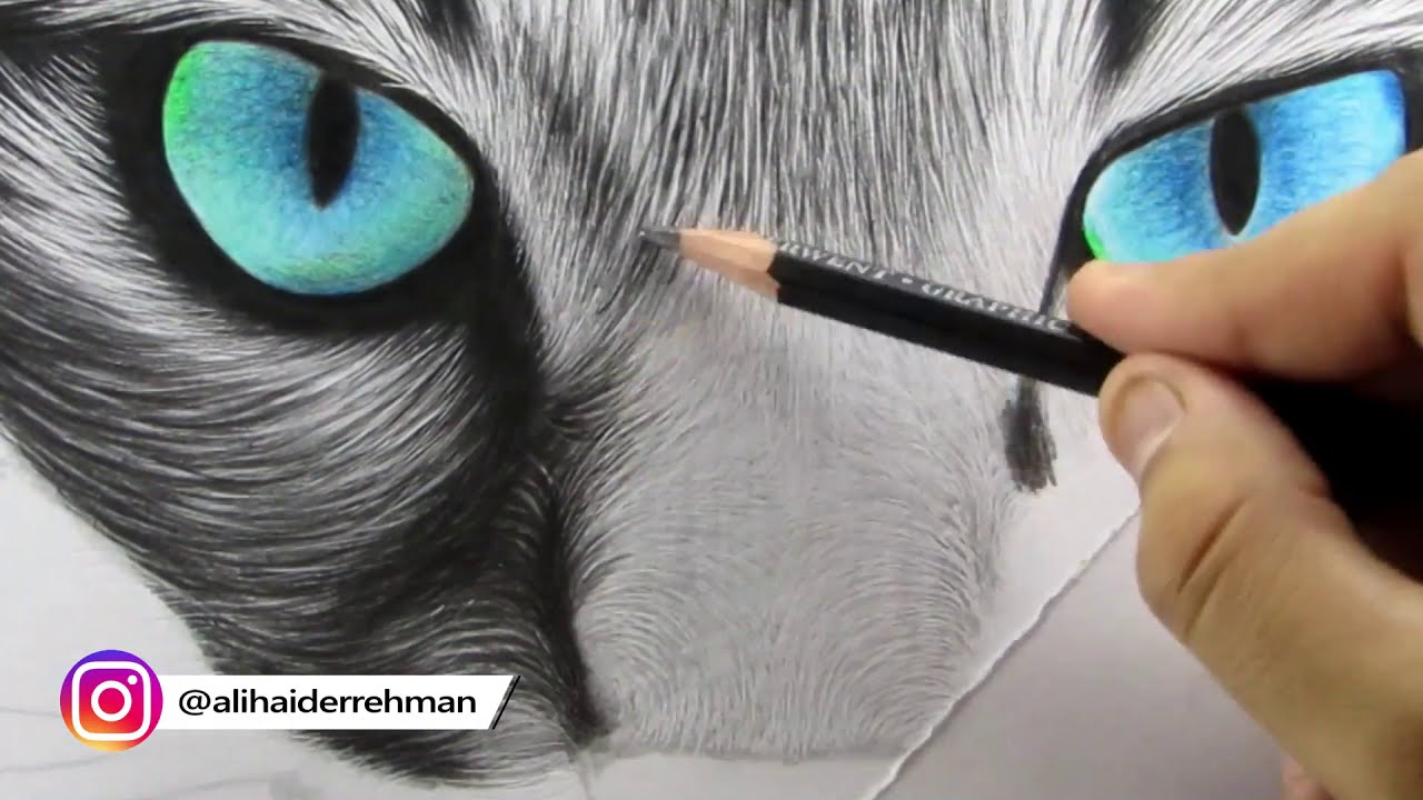 realistic cat drawing for beginners by ali haider