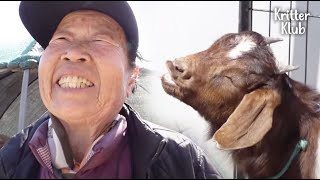87-Year-Old Grandmother Raises A Goat Who Acts Like A Dog | Kritter Klub