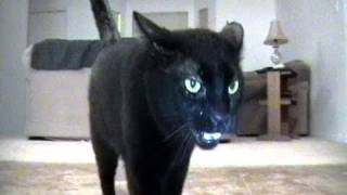 get your cat fixed commercial