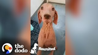 Furless Dog Has Complete Transformation After Being Found | The Dodo Reunited Season 2