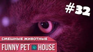 СМЕШНЫЕ ЖИВОТНЫЕ И ПИТОМЦЫ #32 ФЕВРАЛЬ 2019 [Funny Pet House] Смешные животные