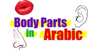 Body Parts in Arabic  - Learn Arabic