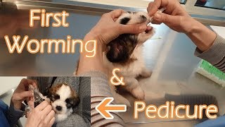 First worming of a puppy