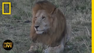 Safari Live - Day 230   National Geographic