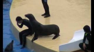 Swimmer Reanimated By Sealion Funny Video