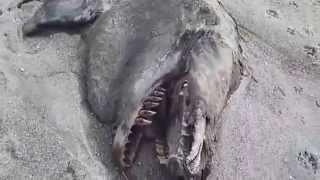 Смотреть онлайн Останки морского чудовища на берегу океана