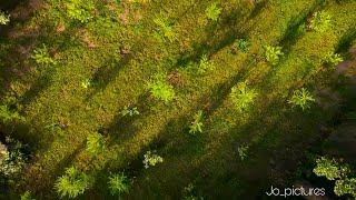 Dji Mavic Mini 2,7k Footage | Cinematic/FPV Footage