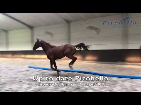 Up To Date Picobello Z @ home 2 years old