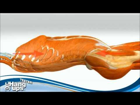 Тупая тянущая боль в правом боку со спины