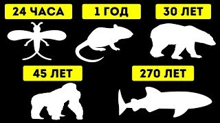 Животные с самой короткой и самой длинной продолжительностью жизни