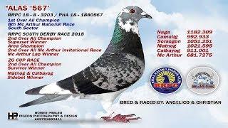 pigeon racing 2019 philippines champion - Thủ thuật máy tính - Chia