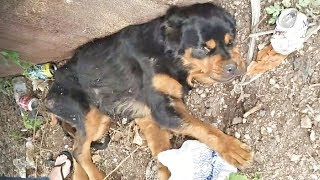 This Paralyzed Pup Was Discarded At A Notorious Dumping Ground – But Then A Stranger Spotted Her