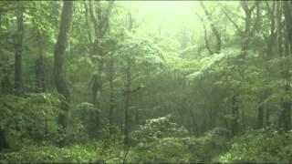 【癒し系】自然音 雨の森