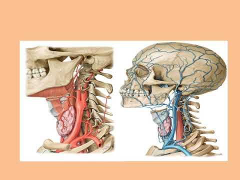 Plan de tratament pentru bursita articulației cotului