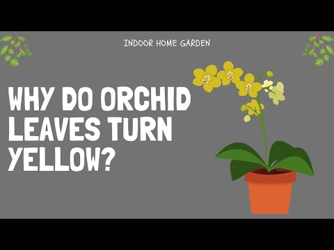 , title : 'Why Do Orchid Leaves Turn Yellow | Prevention Tips