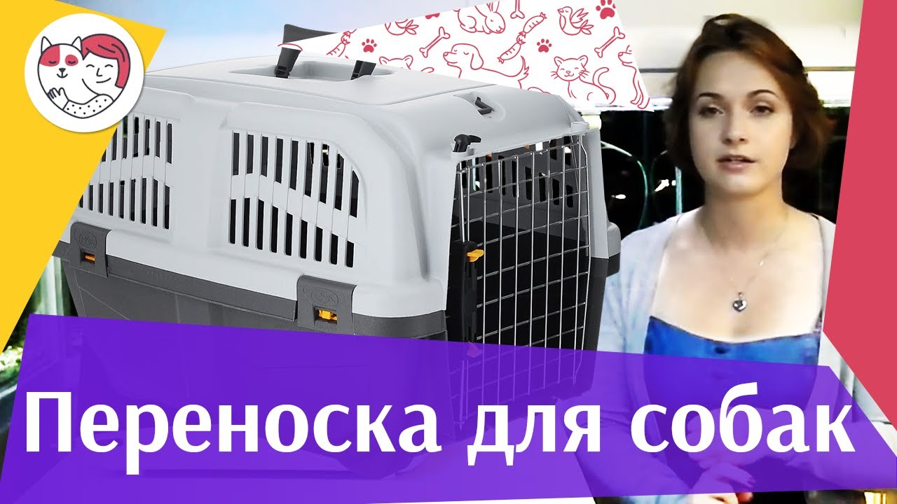 Переноски для собак на ilikepet